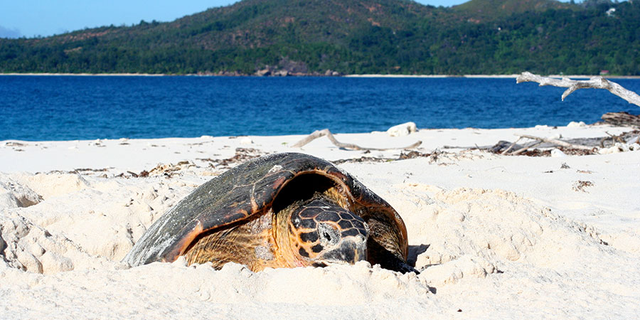 turtle_season_alec-Taylor